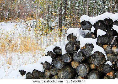 Pile Of Snow Covered Logs In The Forest