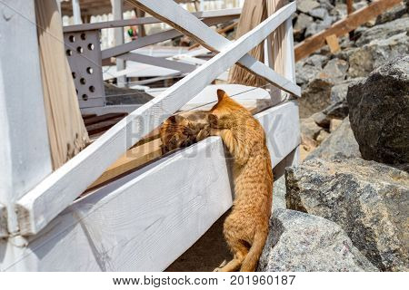 Two Yellow kittens playing outside. Two cat fight and play in stone
