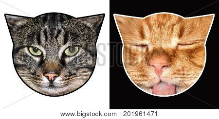 Two cats heads funny creative image isolated black and white background