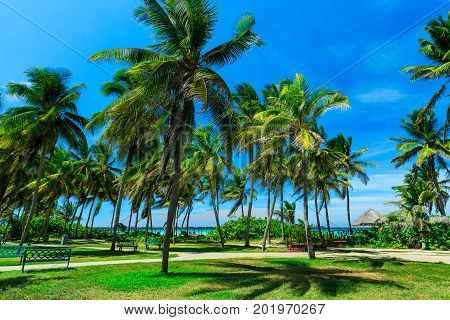 great amazing view of tropical palm garden with beach and ocean ahead agaist blue sky background on sunny day