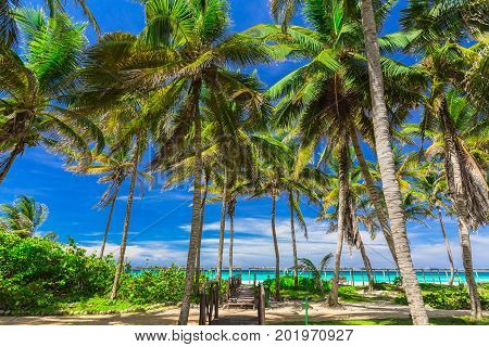 amazing inviting view of tropical pal garden with beach and tranquil turquoise ocean on blue sky background at Cayo Coco Cuban island, sunny summer beautiful day