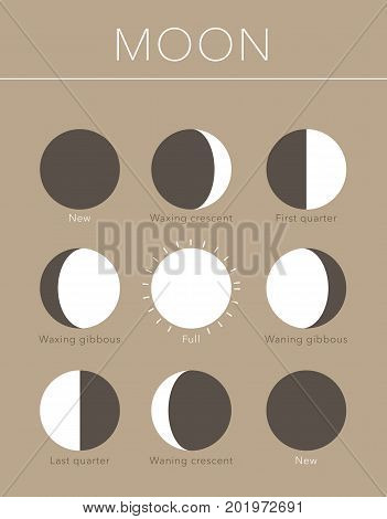 moon phases flat vector background on brown