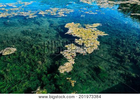 abstract view of a nice, beautiful natural clear ocean water pond in tropical garden with seaweeds floating on water, you could see the bottom of the pond the water so clean, Cayo Coco island, Cuba