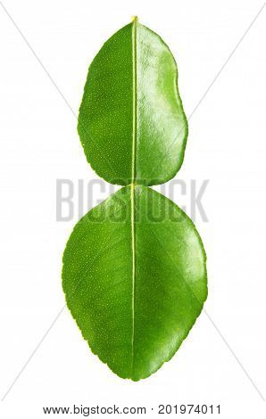 close up of kaffir lime leaves on white background