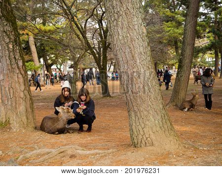 OSAKA, JAPAN - JULY 05, 2017: Unidentified women feeding a wild deers in Osaka resting under the trees in Osaka park.