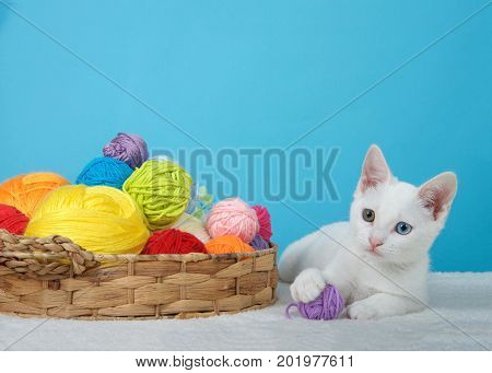 Small white kitten with heterochromia or odd-eyed next to a brown basket with colorful balls of yarn one ball in paws looking to viewers left. Blue background with copy space
