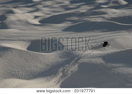 A small black beetle leaves a trail roving over giant sand dunes at White Sands National Monument.