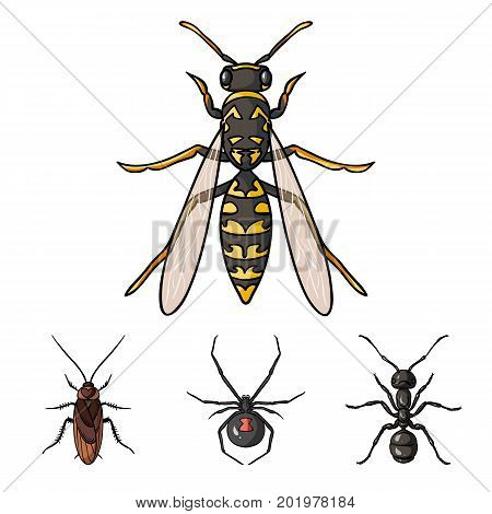 Spider, ant, wasp, bee .Insects set collection icons in cartoon style vector symbol stock illustration .