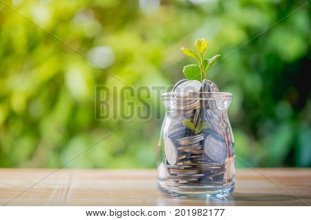 Saving money concept coins in Glass bottles with plant on woodPlant growing in glass with coins full