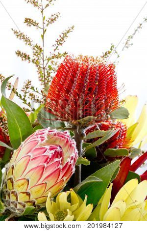Close Up Of Bunch Of Native Australian Flowers