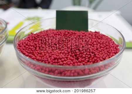 Genetically modified agricultural millet in the glass saucer, close up