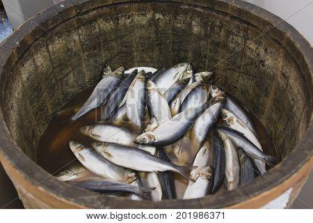Herring in a wooden barrel - sea fish, close up