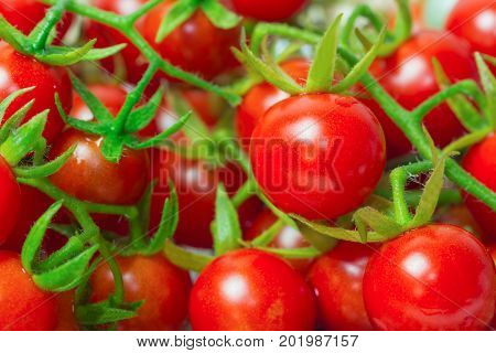 Fresh cherry tomato in side view. Close up lovely cherry tomato for background or wallpaper. Prepare fresh cherry tomato for home cooking look so delicious. Macro concept foe background and textured. Cherry tomato for background concept.