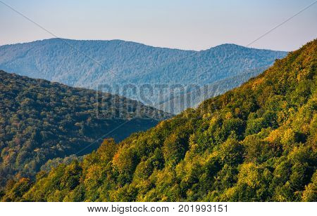 Forest On Mountain Hillside At Sunrise
