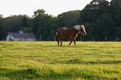 a horse in pasture with barn poster