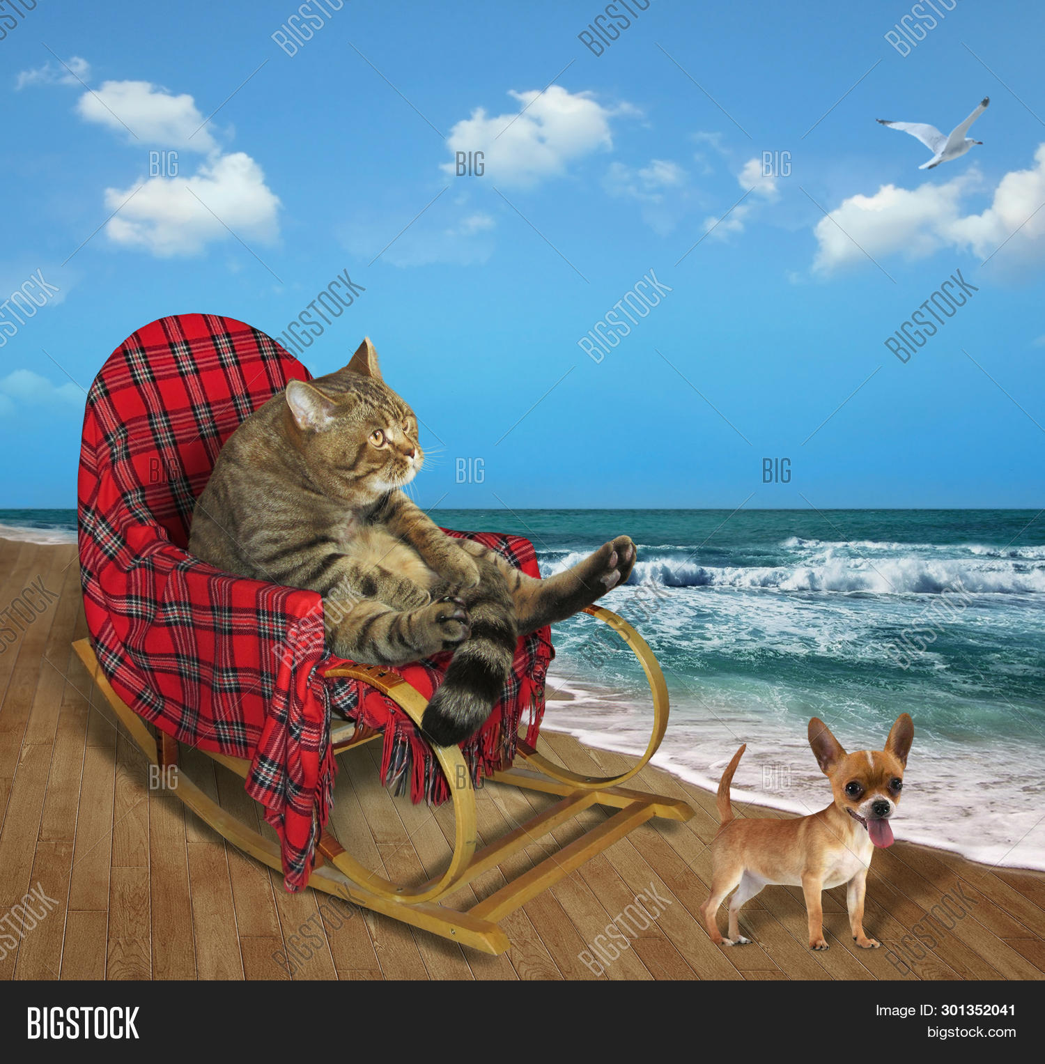 Magnificent Cat Rocking Chair Image Photo Free Trial Bigstock Squirreltailoven Fun Painted Chair Ideas Images Squirreltailovenorg