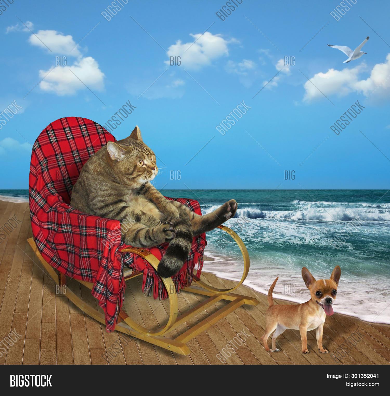 Swell Cat Rocking Chair Image Photo Free Trial Bigstock Frankydiablos Diy Chair Ideas Frankydiabloscom