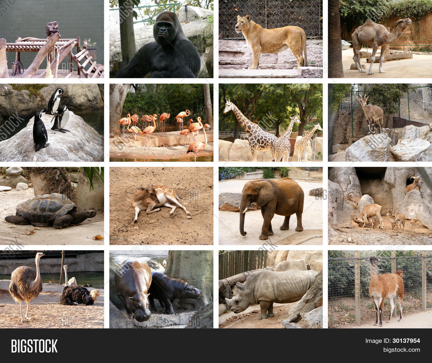 Wild Animals Collage Image Photo Free Trial