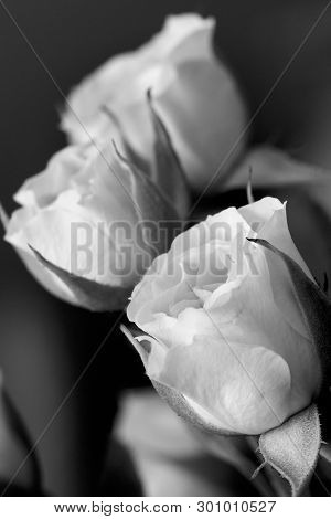 A Black And White Photograph Of Miniature Roses.