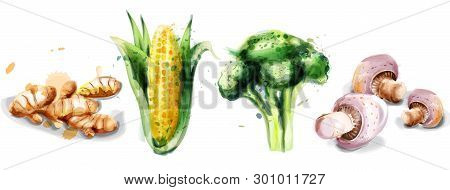 Vegetables Watercolor Vector Set Collection. Mushrooms, Corn, Brocoli And Gingers