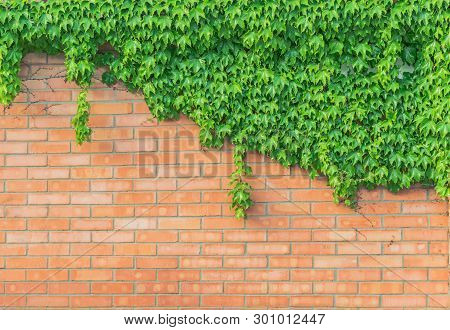 Stock Photo Old Texture Brick Wall Background Detailed Pattern Covered In Ivy