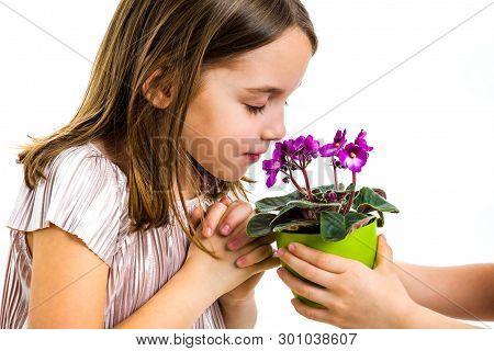 Little Girl Smelling Viola Flowers In Green Pot.