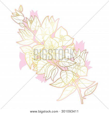 Vector outline Bougainvillea or Buganvilla flower bunch with bud and leaf in gold and pink isolated on white background. Tropical contour Bougainvillea branch for wedding or greeting design. poster