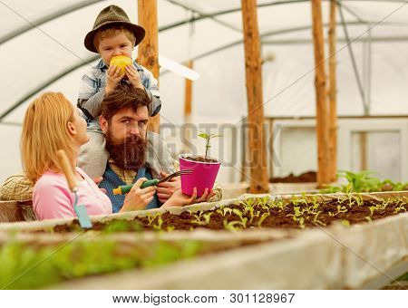 Summer Cultivation. Cultivation Ground In Summer. Family Do Cultivation In Summer Greenhouse. Summer
