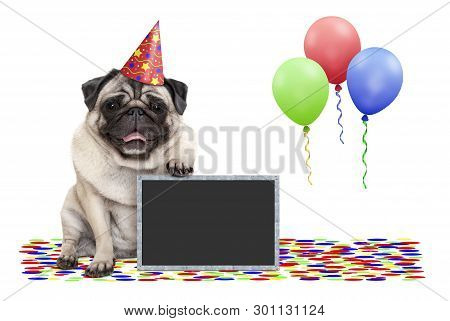 Frolic Smiling Birthday Party Pug Dog, With Blackboard, Confetti And Balloons Decoration, Isolated O