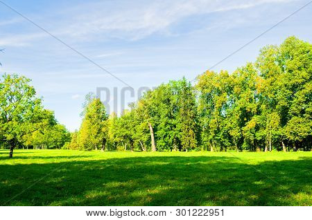 Summer landscape in sunny weather - forest summer trees growing in the park. Summer park nature in sunny summer day