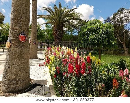 Summer Blooms In Victoria, On The Island Of Gozo, Malta