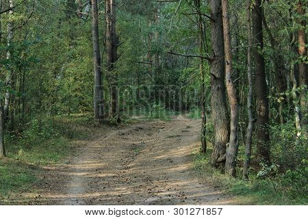The road in the beautiful green summer forest. Northern forest. Walk through the forest. Journey through the forest. Tourism in the North of the country. Nature reserve. Pine and spruce forest. Mixed forest. Path in the forest