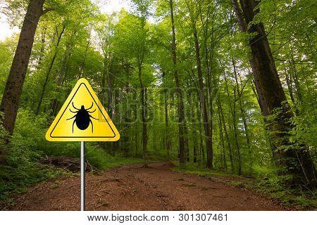 Tick insect meningitis warning sign in nature forest. Lyme disease and tick-borne meningoencephalitis transmitter.