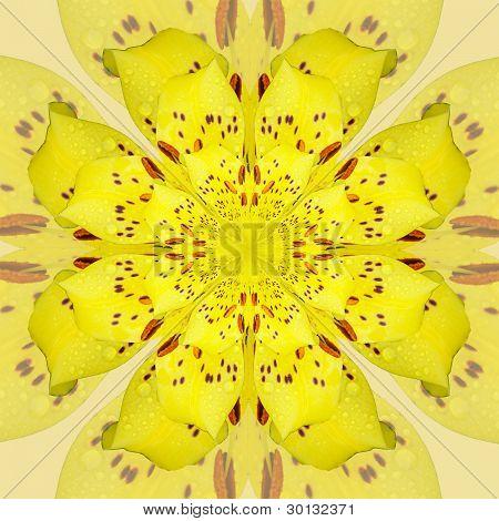Daylily Kaleidoscope