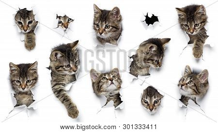 Cats In Holes Of Paper, Little Grey Tabby Kittens Peeking Out Of Torn White Background, Ten Funny Pl