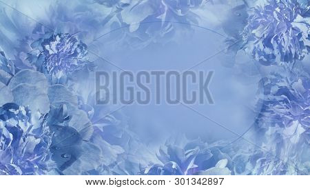 Floral Light Blue Background.  Flowers Fnd Petals Blue Piones  Close-up.  Greeting Card.  Place For