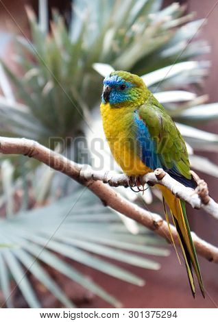 Colorful Parrot With Yellow,orange,green And Blue Cover Parots Feather, Climbing Tree Branches In A
