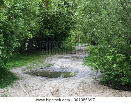 Footpath In A Deep Forest. Green Thickets