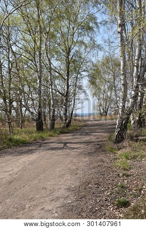 Beautiful Gravel Road With Birches By Roadside At The Swedish Island Oland
