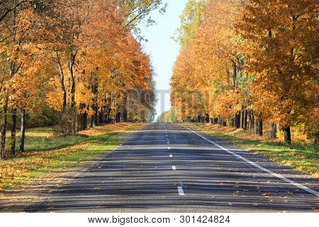 Trees with fall foliage on country park and road