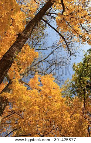 Trees with fall foliage on country park
