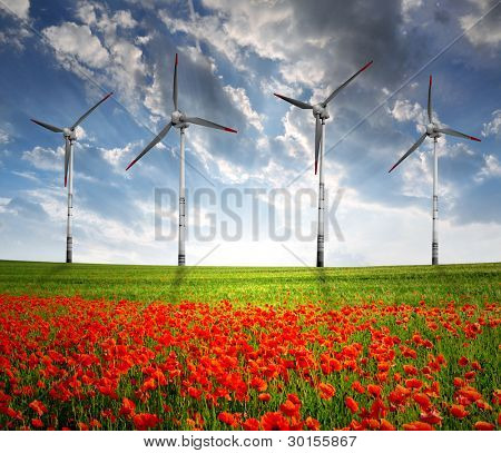 red poppy field with wind turbine