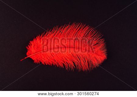 Red feather close up. Fashion, zoology, ornithology magazine cover concept. Exotic, tropical bird macro feather on black background. Accessories, clothes decoration artificial material texture poster