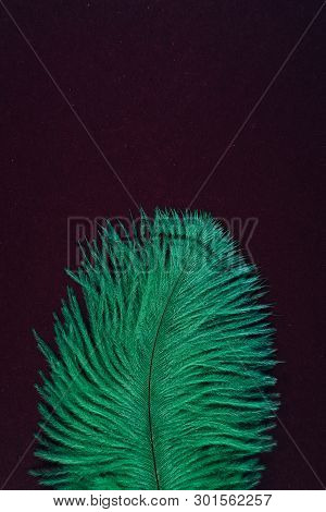 Green artificial isolated feather close up. Exotic, tropical bird macro single feather on black background. Fashion, ornithology magazine cover concept. Accessories, clothes decoration texture poster