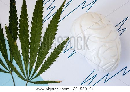 Marijuana Or Cannabis Seizures Concept Photo. Two Green Cannabis Leafs Lie Next To The Brain Figure