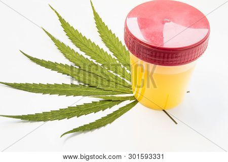 Medical Laboratory Container With Urine Sample Rests On Green Leaves Of Marijuana (weed). Photo Conc