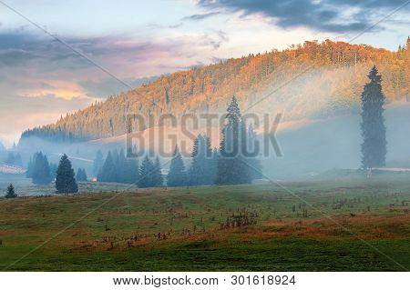 Gorgeous Sunrise In Romanian Mountains. Foggy Countryside Autumn Scenery. Spruce Trees On The Meadow