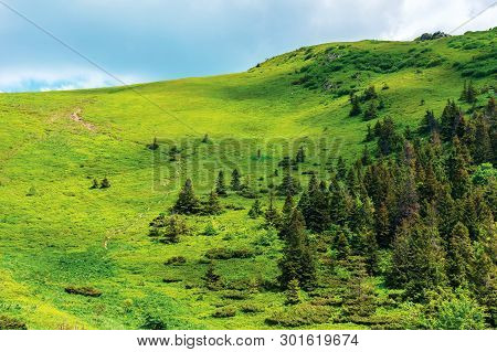 Footpath Up The Hill In Summer. Beautiful Nature Scenery On A Sunny Day. Coniferous Forest On The Sl