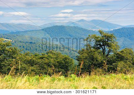 Wonderful Summer Landscape Of Carpathians. Primeval Beech Forest On The Edge Of Alpine Meadow. Svydo