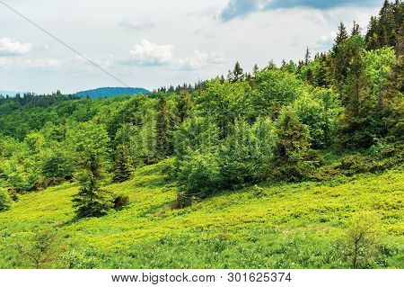 Forest On Hill In Summer Mountain Landscape.  Beautiful Scenery On A Sunny Day With Cloudy Sky. Wond